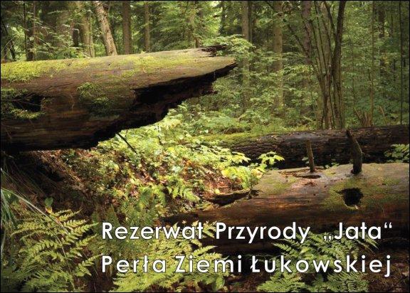 Gmina Łuków - grafika